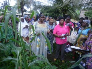 Women groups learn best practices at a demonstration farm in Mambanda, Kumba