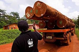 Du bois exploité dans une forêt