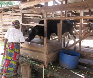 Une productrice locale de lait au Cameroun