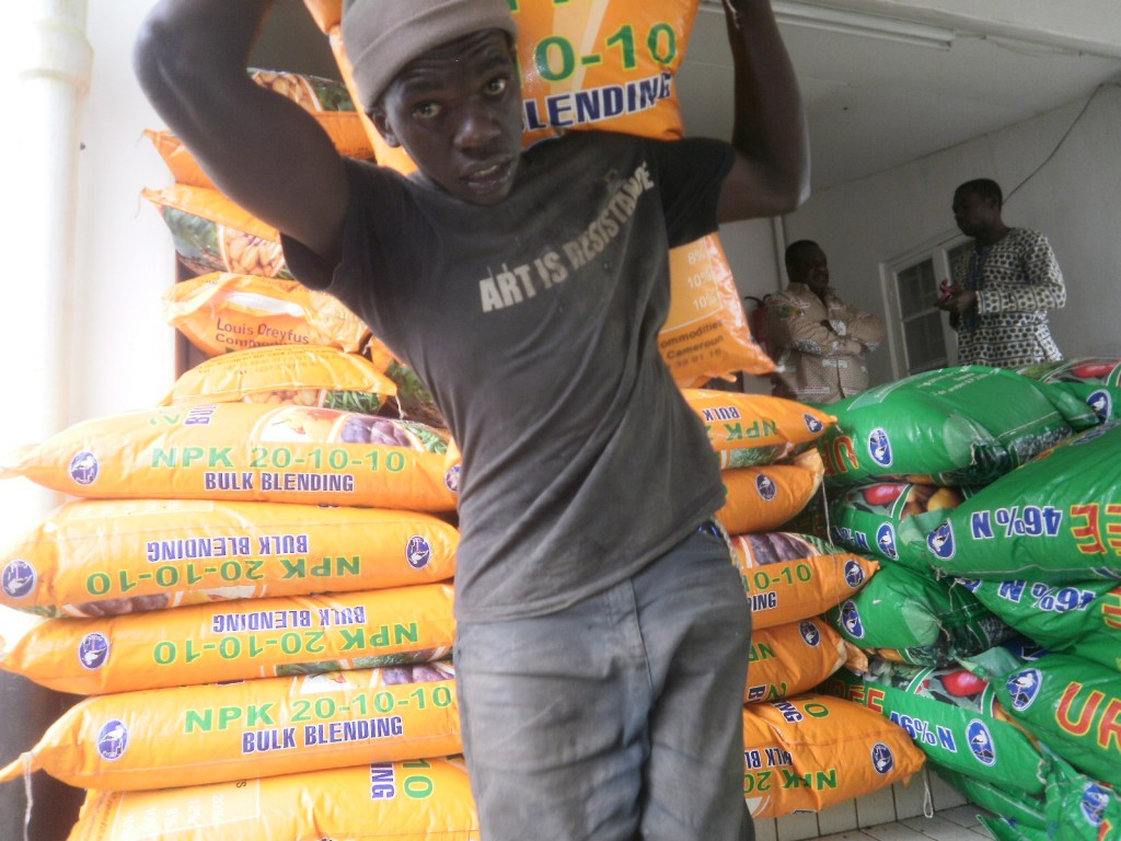 Maize seeds are off-loaded from SOWEDA premises by beneficiary famers in Cameroon